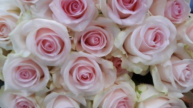 Sortie Red Lands Roses