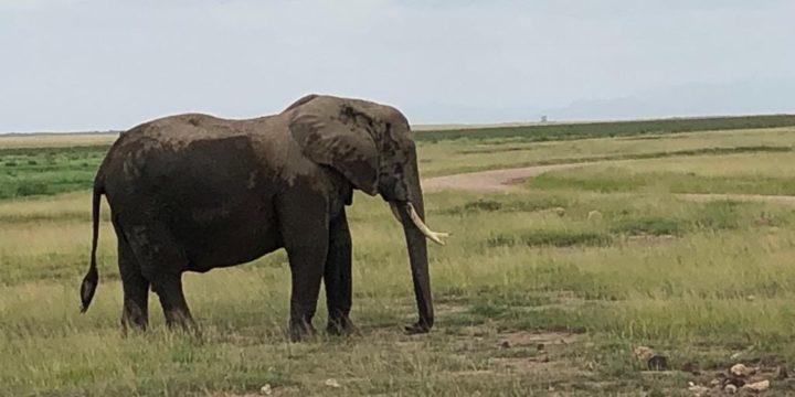 Week-end à Amboseli