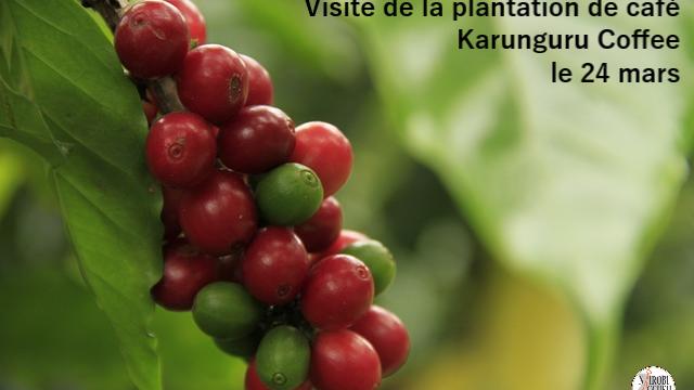 Visite Plantation de Café – Reportée
